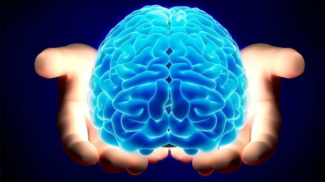 العلماء يكتشفون أخيرا مفتاح تشغيل المخ البشري
