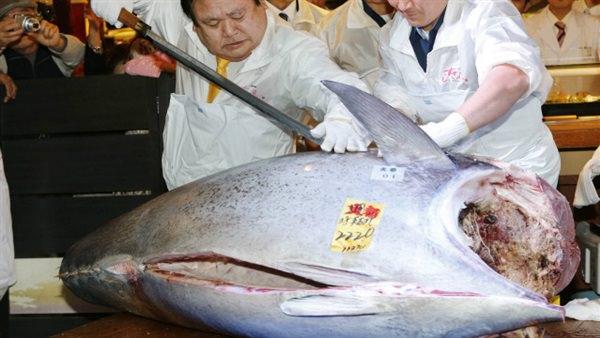 سمكة تونة ب3 ملايين $ في اليابان