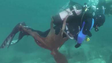 شاهد.. أخطبوط ضخم يحاول إغراق غطاس