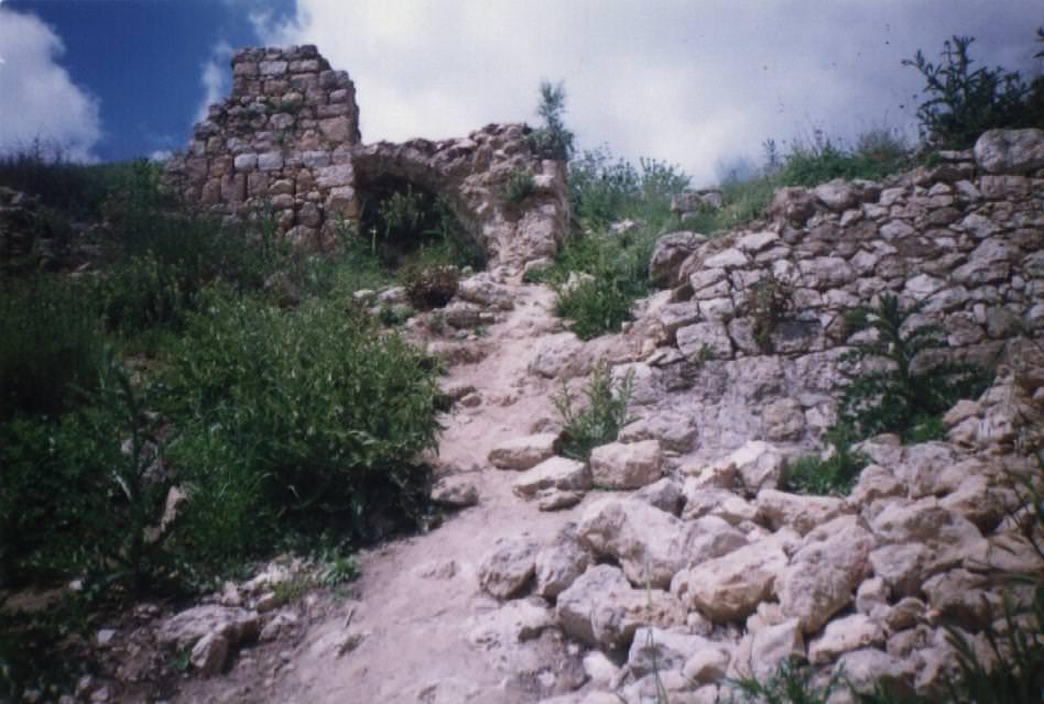 قرية الشيخ داود في فلسطين المحتلة [ صورة ]