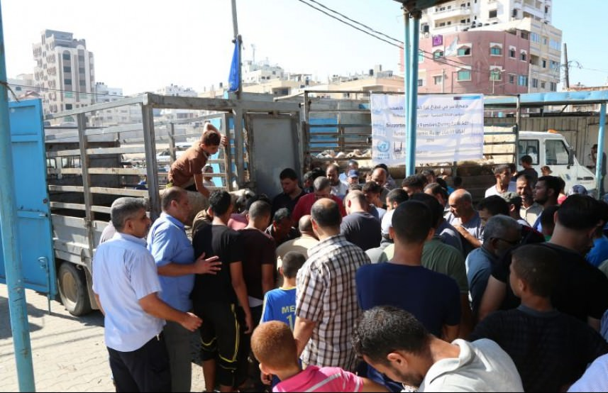 الأونروا توزّع لحوم الأضاحي على 2085 عائلة لاجئة بغزة