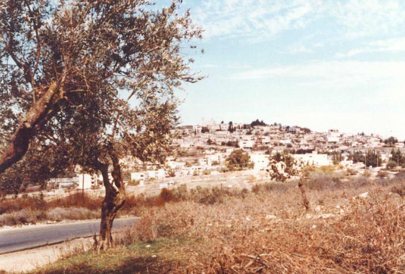 نبذة تاريخية عن بلدة الصفصاف