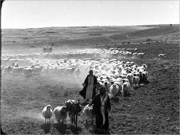 بئر السبع عبر التاريخ / صور
